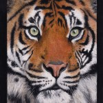 tiger painting fine art print