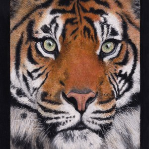 Big cat drawing -tiger