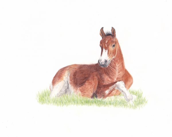 foal 8x10