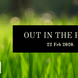 Hikoi and Out in the Park Wellington 2020