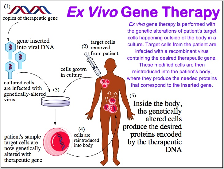 in vivo gene therapy diagram beko electric cooker wiring wix com created by lisaarchibald based on reg top menu click for a injecting the desired