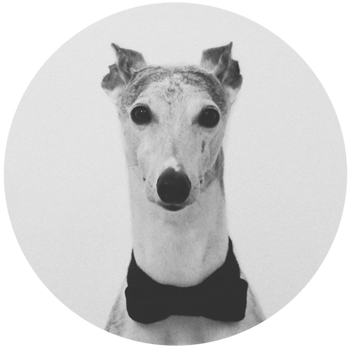 Gene Bowie / whippet