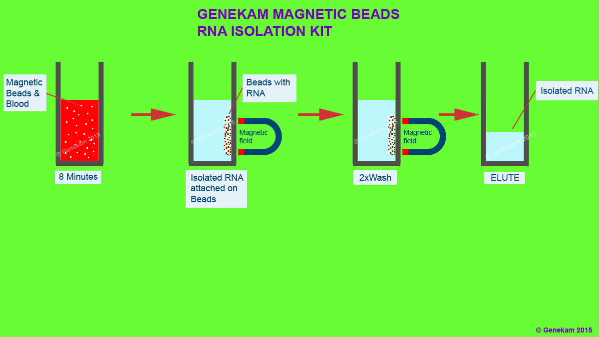hight resolution of magnetic beats rna isolution genekam