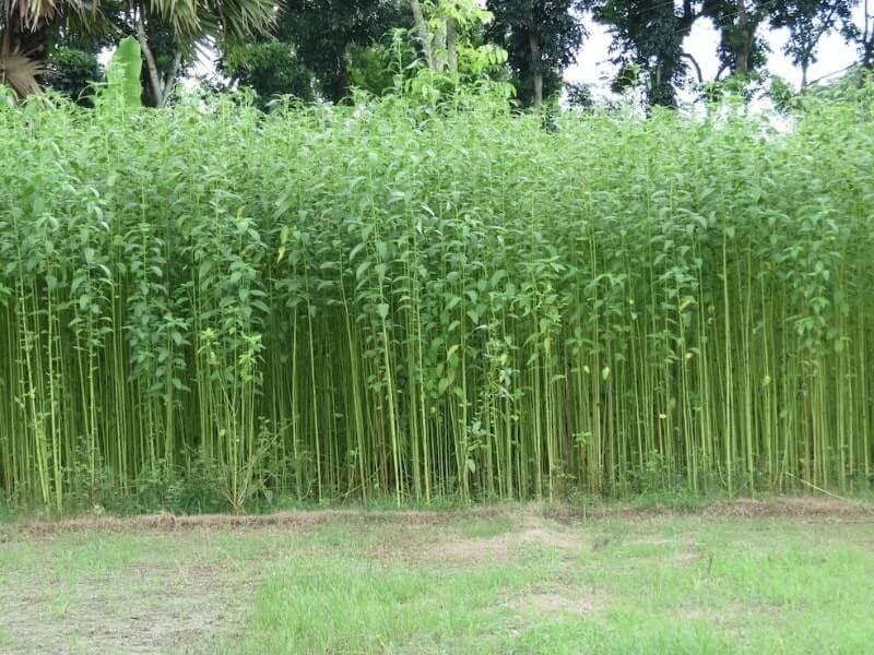 jenis serat tumbuhan dan manfaatnya