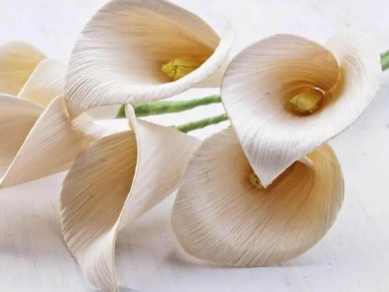 bunga pelepah pisang