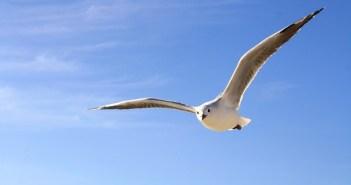 gull-456727_960_720