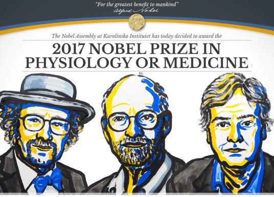 2017 諾貝爾生理醫學獎:掌管晝夜律動的生理時鐘