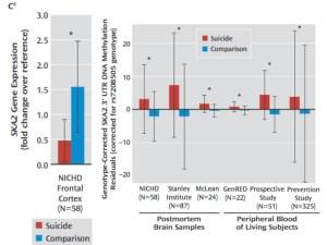 圖片來源:Guintivano J, et al. Am J Psychiatry. 2014 Dec 1;171(12):1287-96.