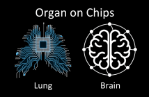Organ on chips