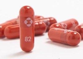 第 1 款核准新冠口服藥?默沙東期中數據:死亡、住院率降 50%