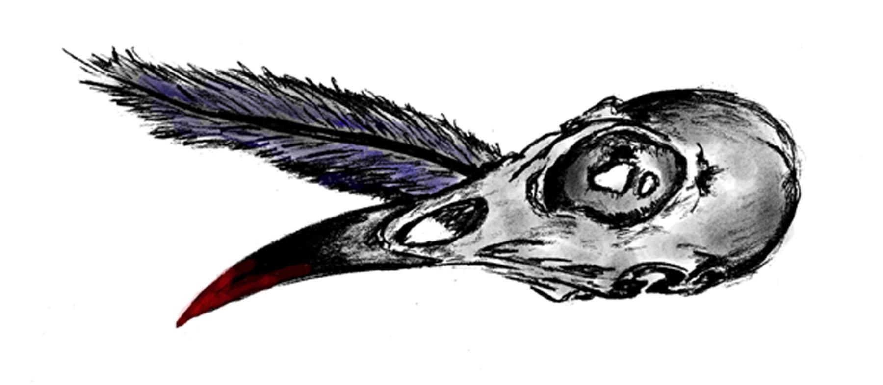 bird-skull.jpg