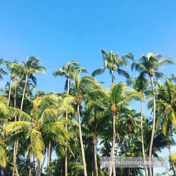 Ngapali Beach Myanmar Palm Trees