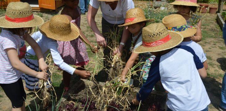 Les récoltes de juin 2017 – jardin pédagogique