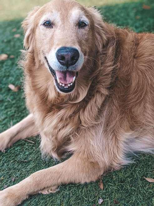 Oakley's Choice CBD Dog Chews