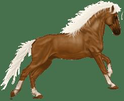 horse-1909491_640