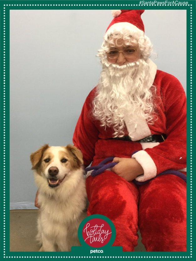 Dog Photo with Santa Claus