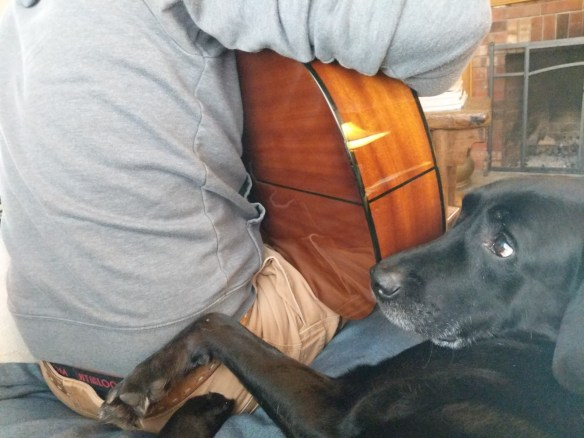 Labrador with guitar