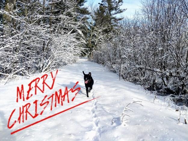 Merry Christmas! 15