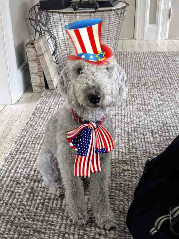 Patriotic Pups for the Fourth of July 29