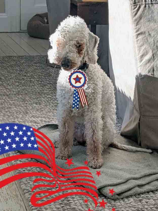 Patriotic Pups for the Fourth of July 28