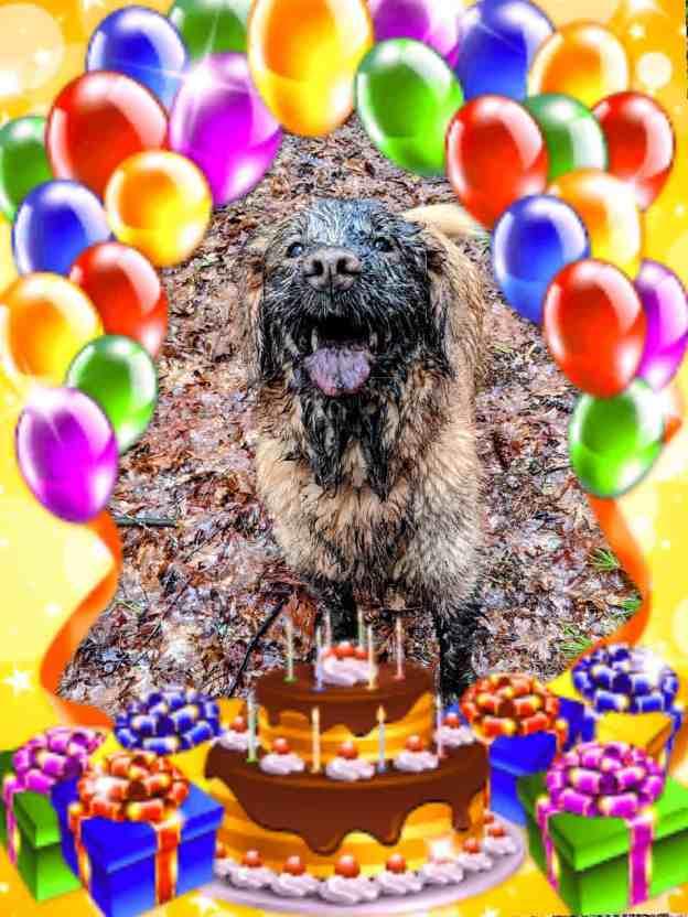 Happy Birthday to Me! Happy Birthday to My Blog! 13