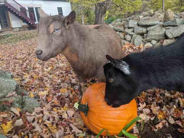 Annual Fall Farm Fun 3