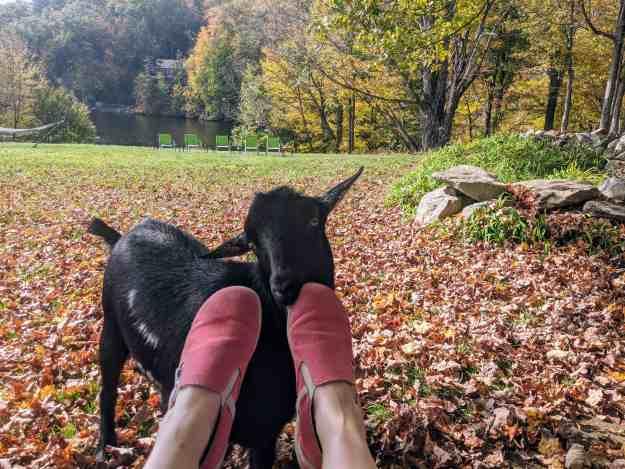 Annual Fall Farm Fun 4