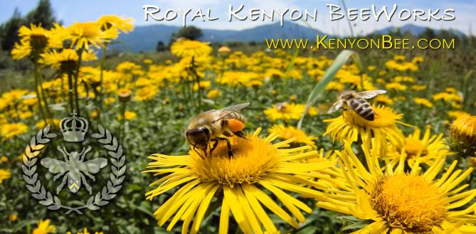Royal Kenyon BeeWorks Flagstaff Honey and Bee Removal in Northern Arizona
