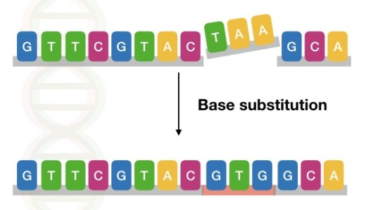 The image shows the type of base substitution mutation in a DNA sequence.
