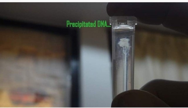 Different types of DNA extraction method