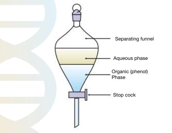 Phenol chloroform DNA extraction: Basics, preparation of chemicals and protocol