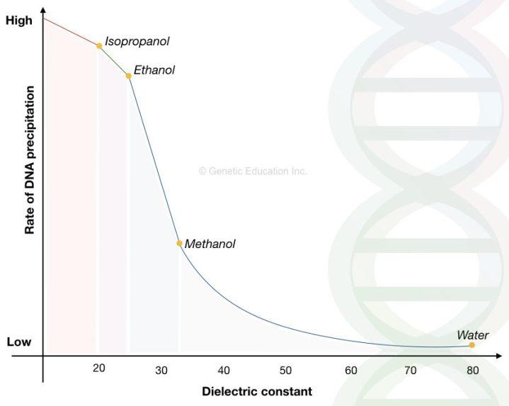 """A quick guide on """"DNA precipitation"""" and DNA precipitation protocol"""