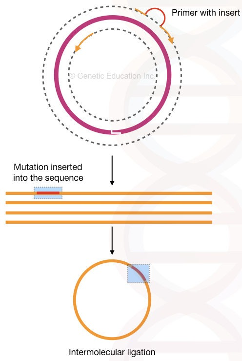 Site-Directed Mutagenesis: Methods and Applications