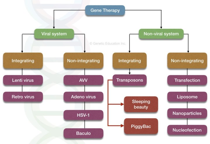 Viral and non-viral vectors for gene therapy