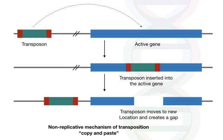 Role of transposons in evolution