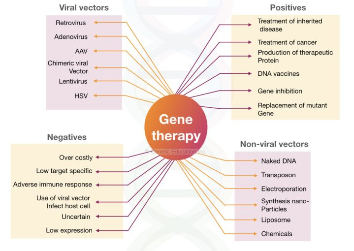 The summary of gene therapy: viral vectors, non-viral vectors, positives and negatives.