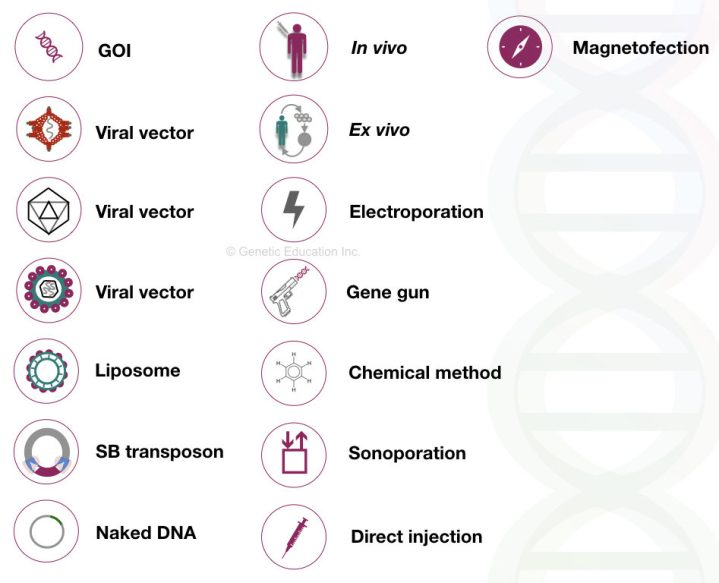 some of the symbols used in the gene therapy