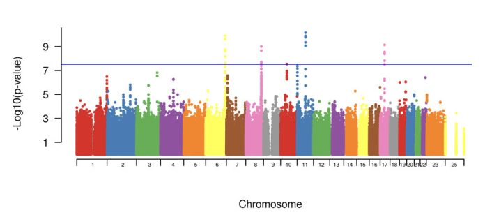The graphical results of results of the SNP analysis of the whole genome