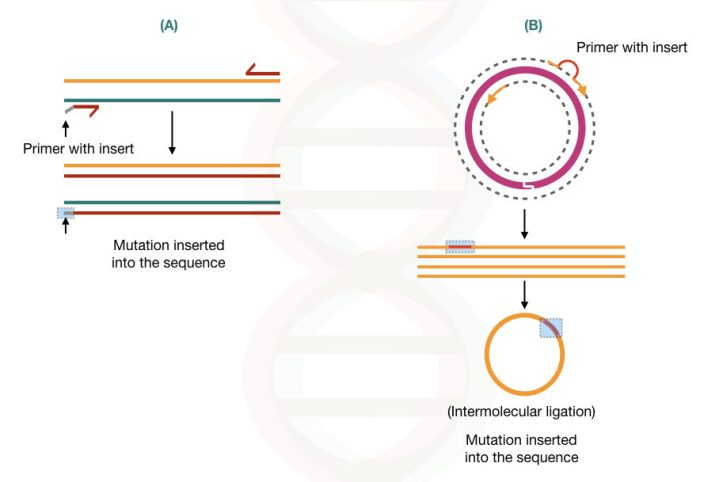The illustration of site-directed mutagenesis using A) conventional PCR method and B) inverse PCR method.