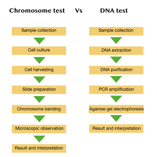 The process of chromosome test and DNA test