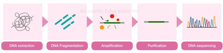 The general outline of different steps in DNA sequencing.