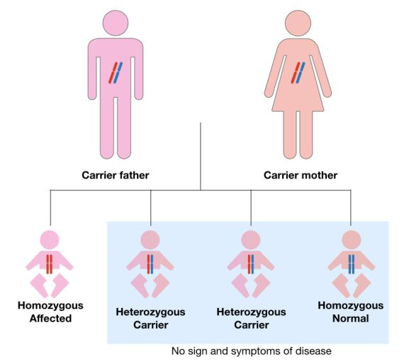 The pattern of autosomal recessive inheritance in cystic fibrosis