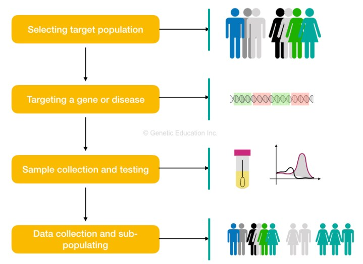 The brief overview of the process of Genetic screening.