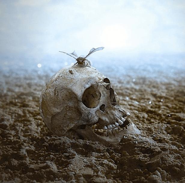 Image result for human extinction