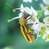 'Billion-dollar pest': EPA approves first 'gene-silenced' insect-resistant RNAi crops