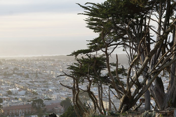 cypress 2