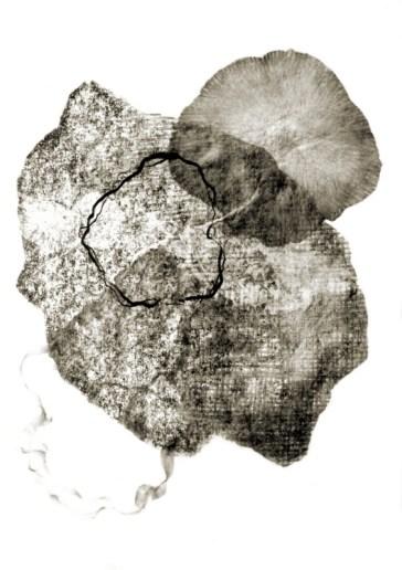 Metamorphosis 2 - Graphite on paper