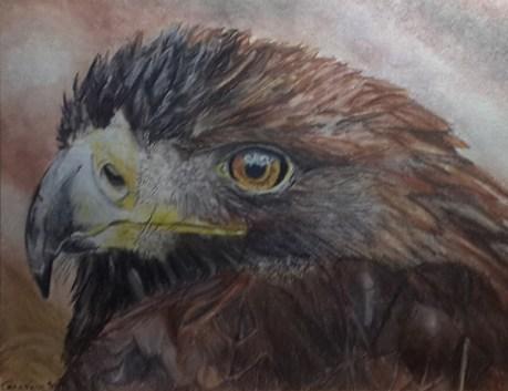 Eagle's Stare - Fabriano accademia - Spectrum Noir pencils