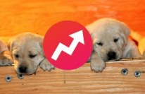 buzzfeed-puppies-e1424889964411