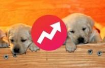 buzzfeed-puppies-e1424889964411